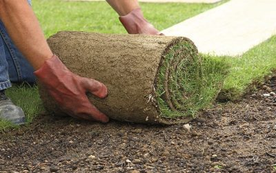 The Most Important Lawn Care Tips