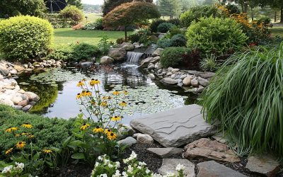 Landscaping Improving – The Importance Of A Professional