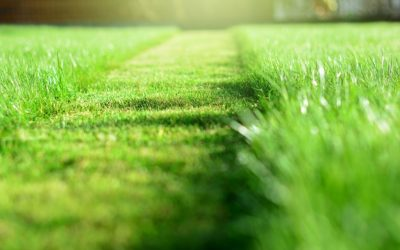 Why Hire a Lawn Mover?