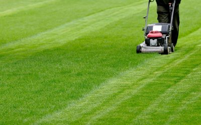 Lawn Mower Questions Answered