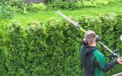Five Reasons To Hire A Professional Landscaper