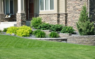 Choosing the Right Privacy Trees and Shrubs for Your Home