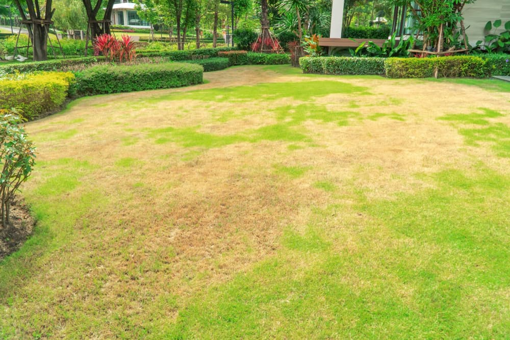 Do You Need To Overseed? Comprehensive Guide to Overseeding a Lawn